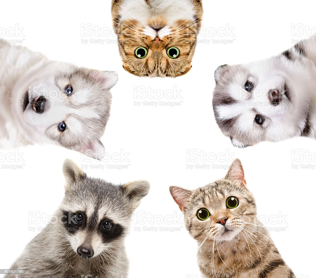 Five charming animals stock photo