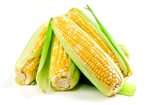 Five corn ears piled up on white background Ears of fresh corn isolated on white background sweetcorn stock pictures, royalty-free photos & images