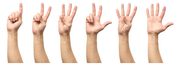 Five counting male hands isolated on white background stock photo