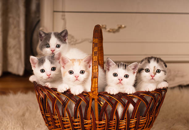 5 つのかわいい kittens に編みバスケット - 沢山の物 ストックフォトと画像