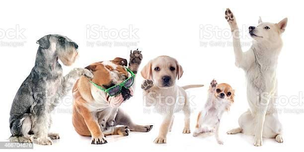 Five dogs picture id466704876?b=1&k=6&m=466704876&s=612x612&h=fjyr9bnmr5kg9qno4hfsyenvu9 yucd74qrod o9zc8=