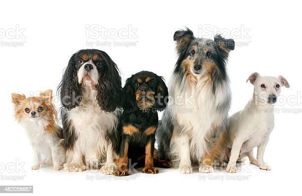 Five dogs picture id482058657?b=1&k=6&m=482058657&s=612x612&h=shjpcemjxcjoghq0zswuonrpx1ijp qnxmnotoyp6c4=