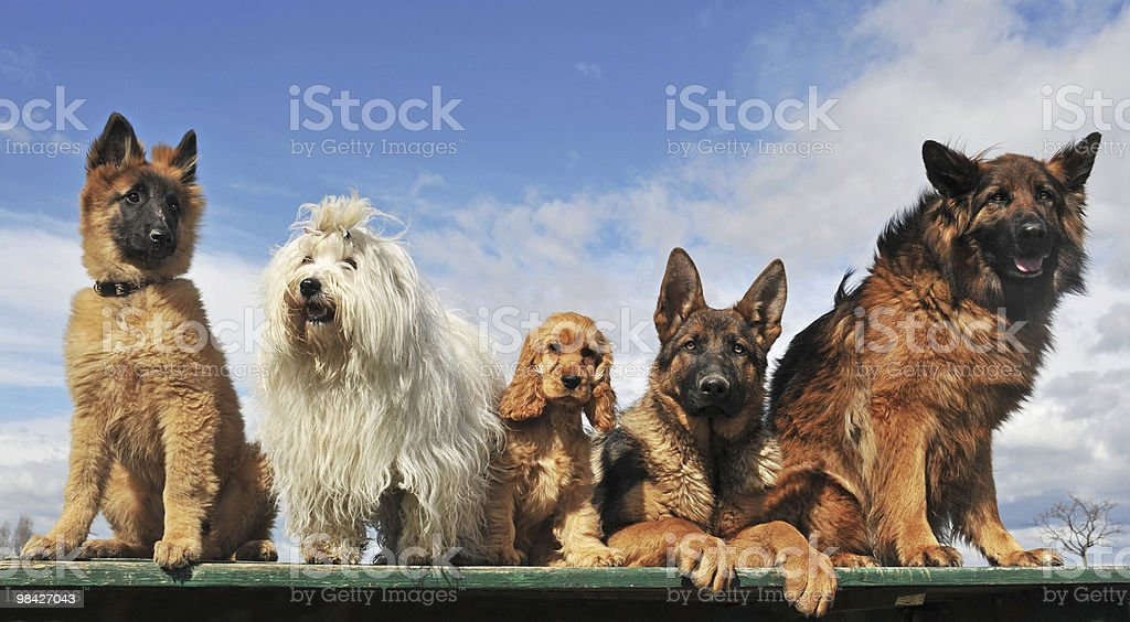 five dogs stock photo