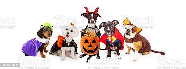 Five dogs wearing halloween costumes banner picture id603873294?b=1&k=6&m=603873294&s=612x612&h=jixly3gyuzohdzgjbtzbqizm  flhu0gn8rf0ax6hcw=