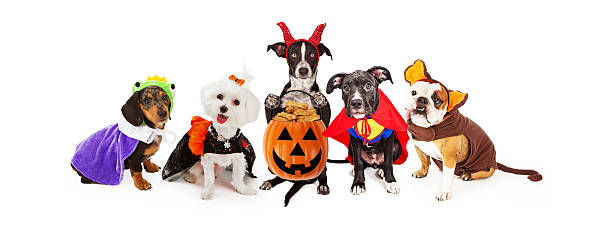 Five Dogs Wearing Halloween Costumes Banner - Photo