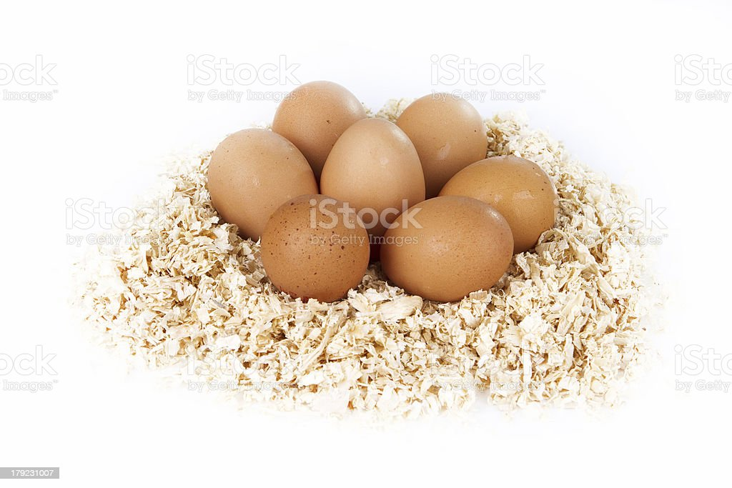 Five eggs on sawdust royalty-free stock photo