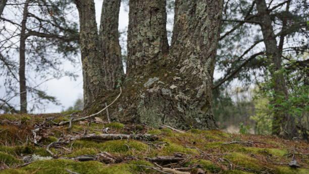 Five Finger Tree stock photo