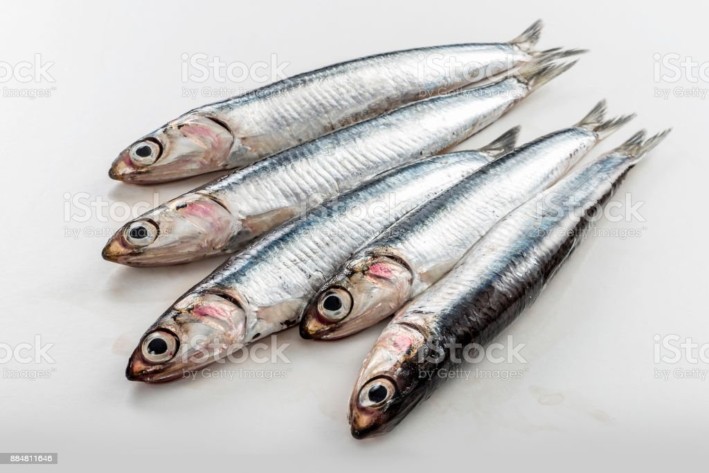 Five fresh anchovies isolated on white background stock photo