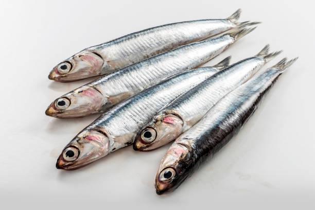 cinco anchoas frescas aisladas sobre fondo blanco - anchoa fotografías e imágenes de stock