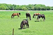 Five horses grazing in sunny pasture by the highway.