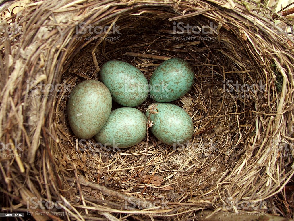 Five green eggs in the nest royalty-free stock photo