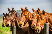 Five horses standing staring next to a fence