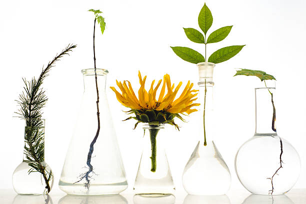 Five laboratory flasks with plants on white background stock photo