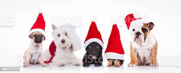 Five little dogs wearing santa claus hats picture id862270712?b=1&k=6&m=862270712&s=612x612&h=empqzrw nmbis z qnostmyopryzrjqhsack8nyvqzg=