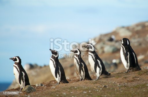 Woman traveler with long hair in life jacket have an Antarctic expedition, exploring the Magellanic Penguins on the remote island in Patagonia Chile