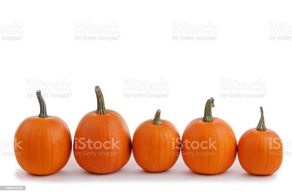 Five orange pumpkins stock photo