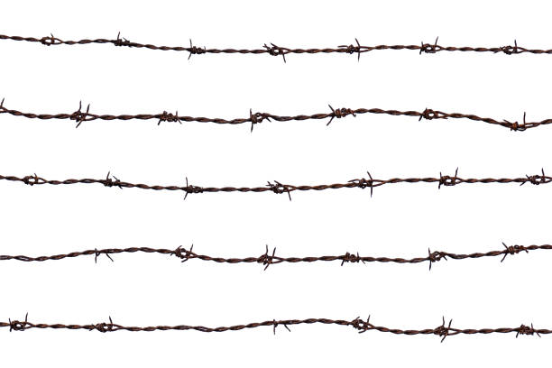 Five pieces of rusty barbed wire isolated on white background. stock photo