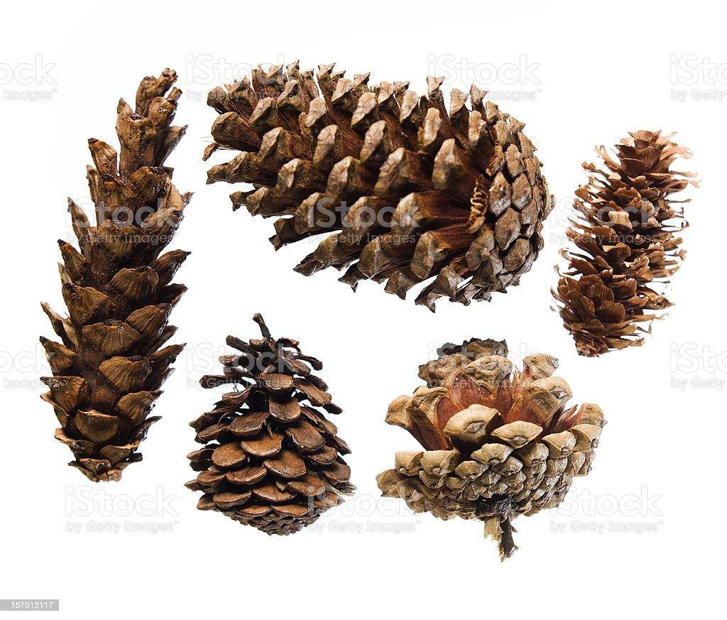 Five pinecones on white stock photo