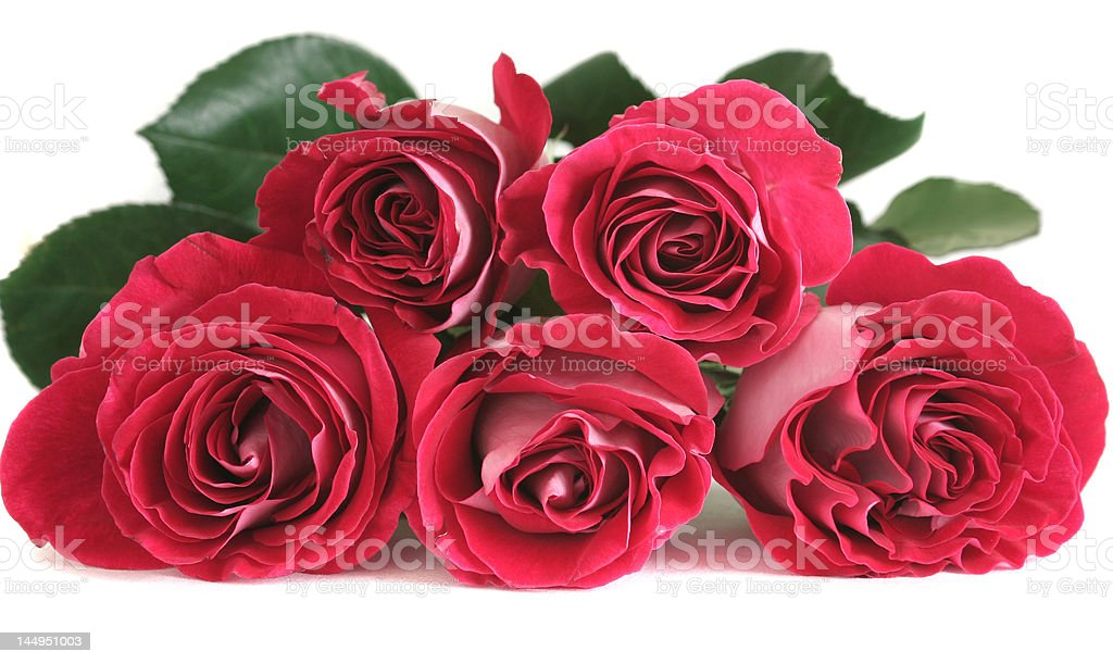 Five pink roses lay stock photo