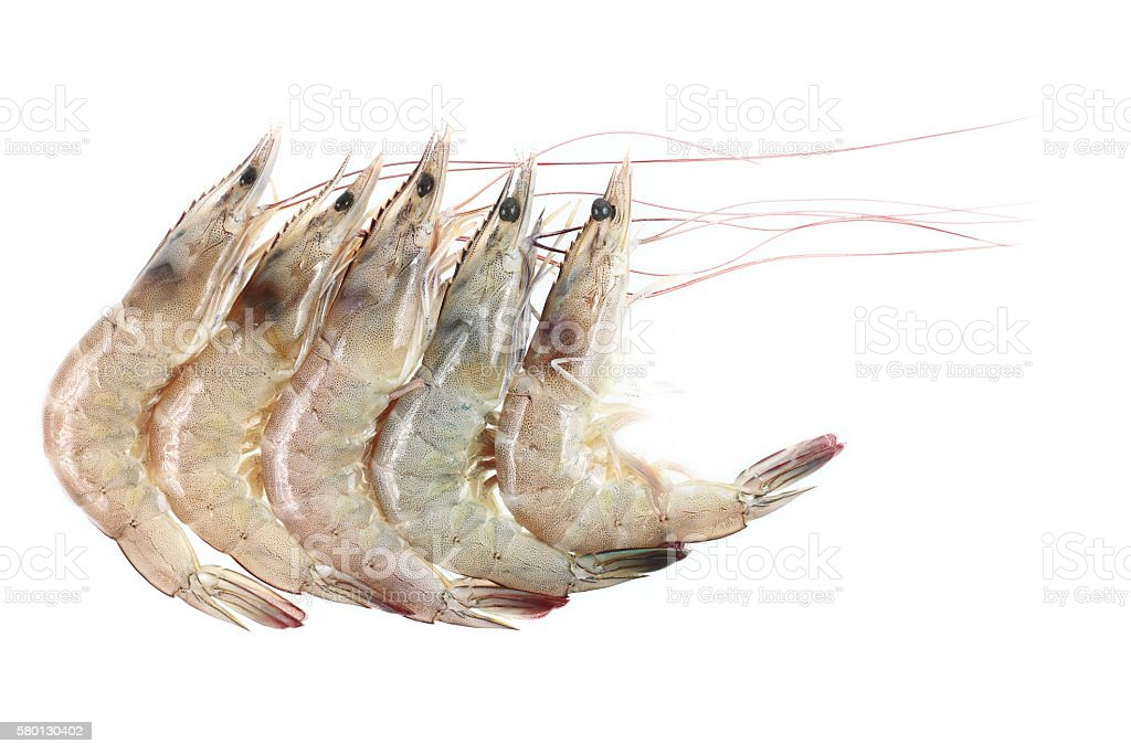 five river prawns isolated on white stock photo