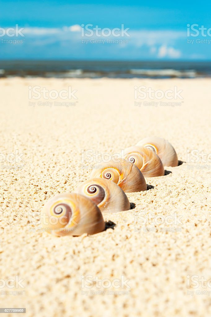 Five sea shells on the beach sand. Landsnail. Outdoors close-up. stock photo