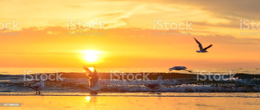 Five seagulls at the sunset beach stock photo