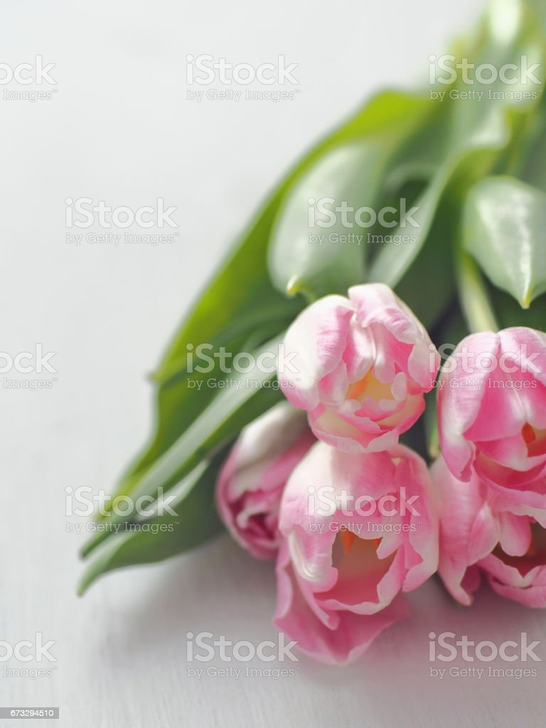Five tulips upon white wooden table. Greeting card. Selective focus on the front. Copy space for your text. royalty-free stock photo