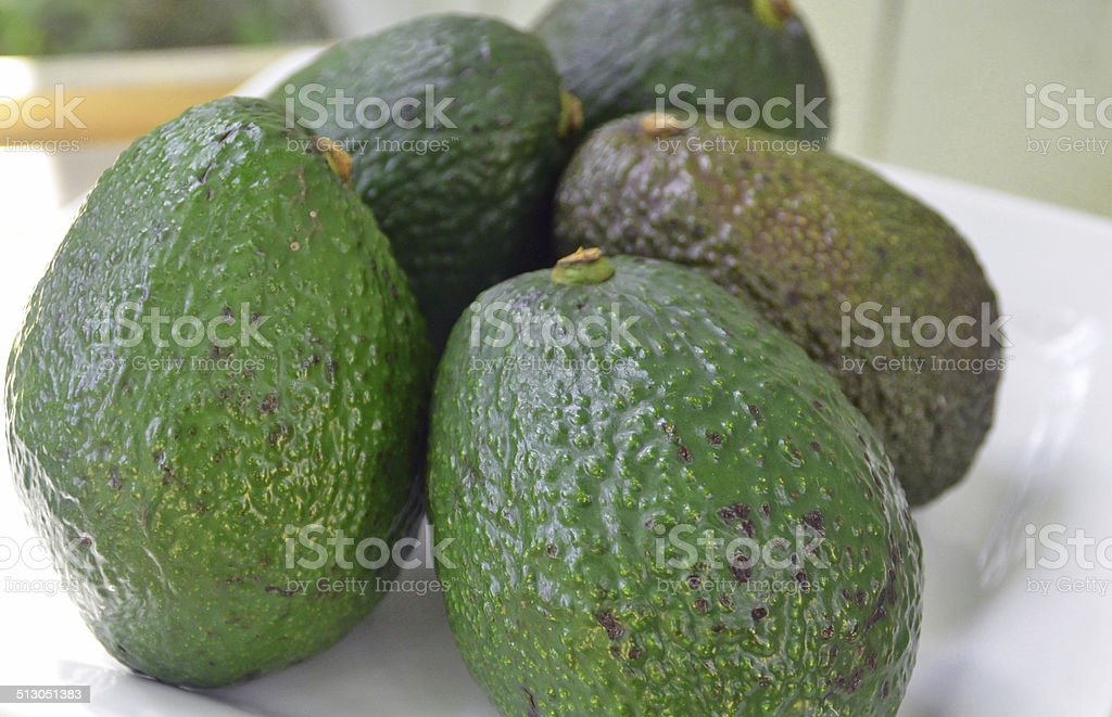 Five unripe avocados stock photo