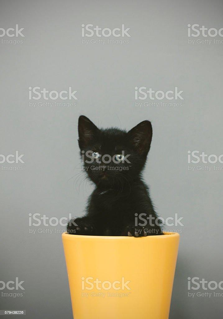 Five Weeks Old Kitten stock photo