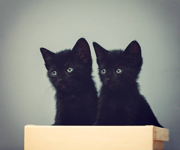 Five weeks old kittens picture id578583730?b=1&k=6&m=578583730&s=612x612&w=0&h=wvcr605ewixfxspecetznx8ajxezrcnenc1ptpgvdsk=