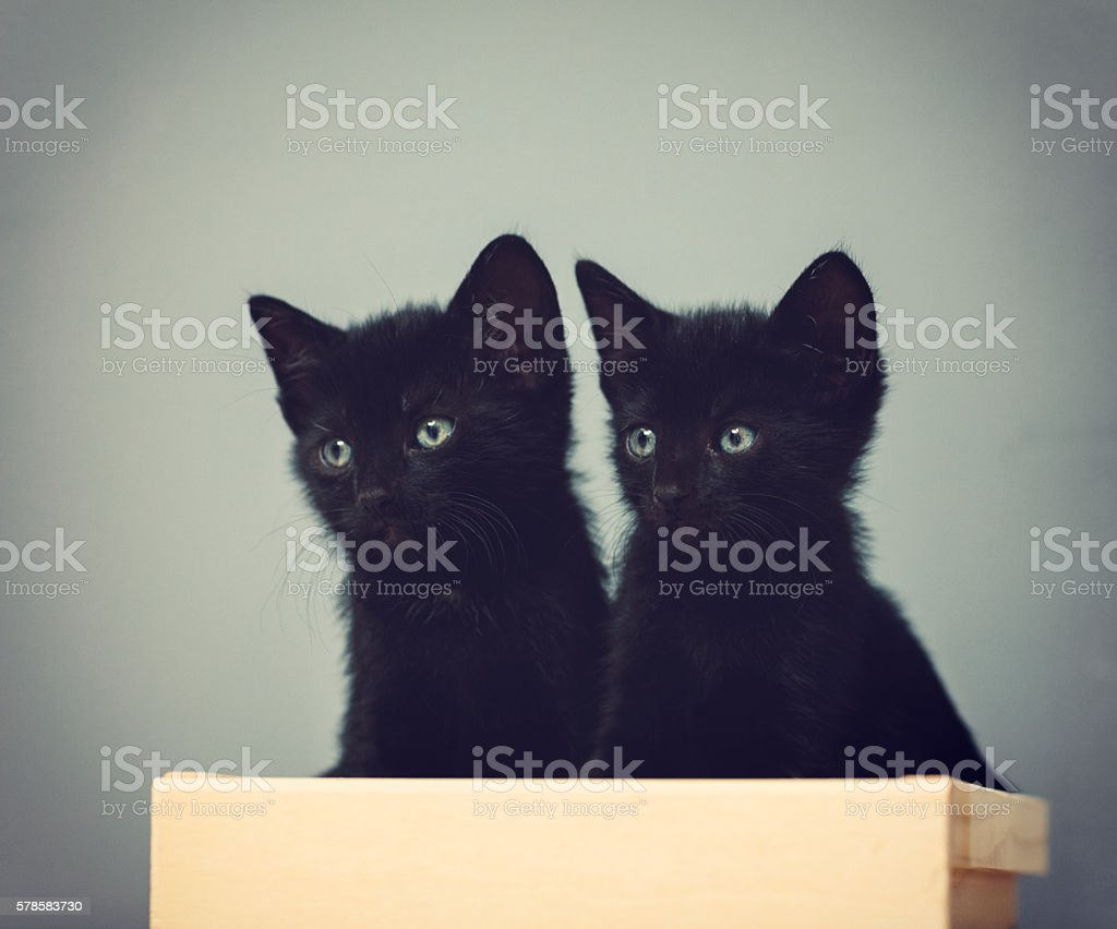 Five Weeks Old Kittens stock photo