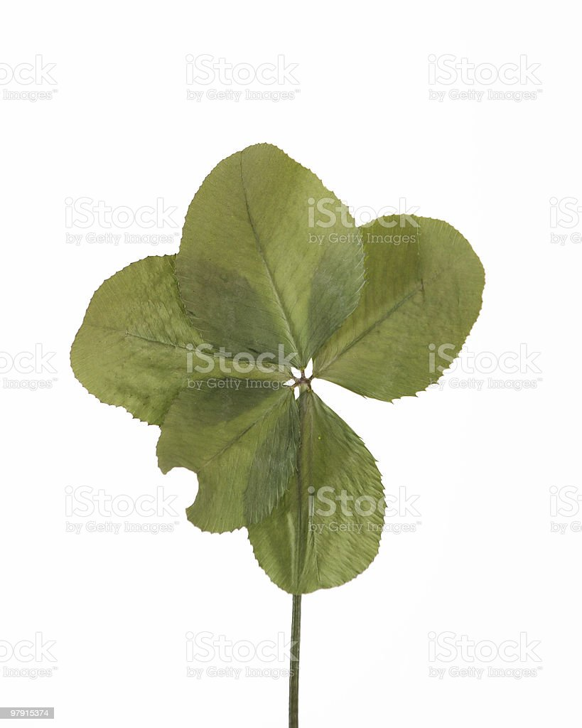 Five-leaf clover royalty-free stock photo