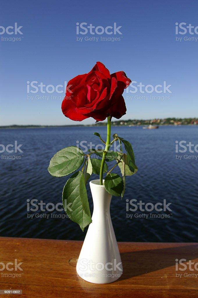 Fjord rose royalty-free stock photo