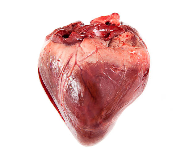 flabby heart - heart internal organ stock photos and pictures