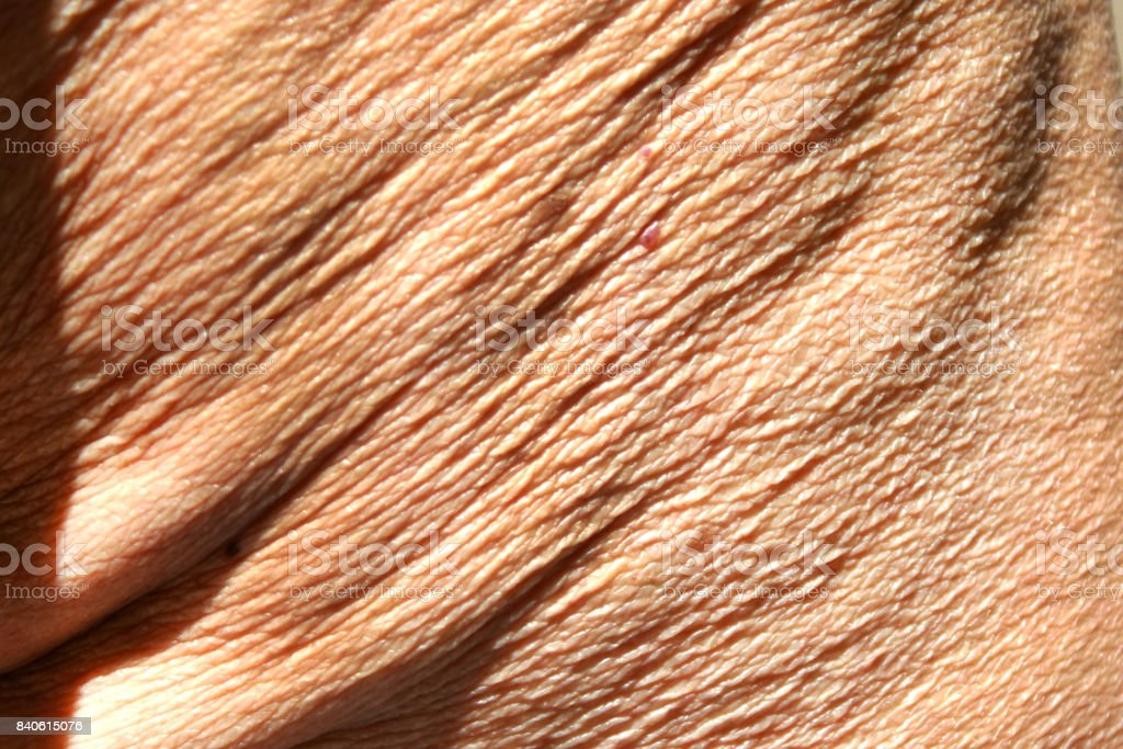 Female nipple pics