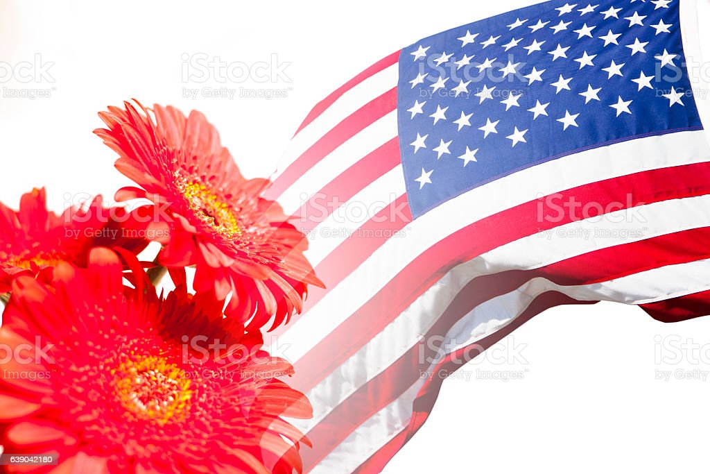 Usa flag and red daisy flowers on white stock photo more pictures usa flag and red daisy flowers on white royalty free stock photo mightylinksfo