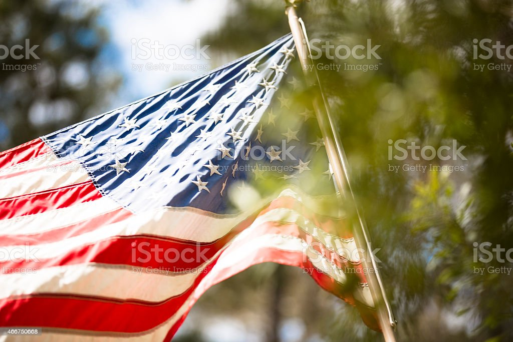 USA flag blowing in breeze. Pine trees foreground. Sunny day. stock photo
