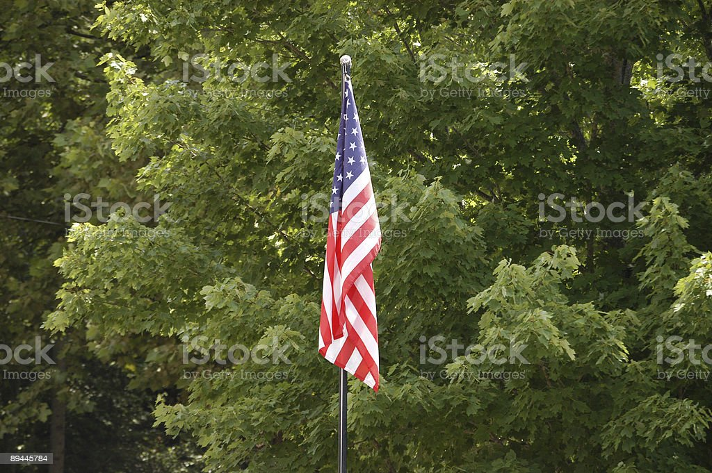 Flag in the trees royalty-free stock photo