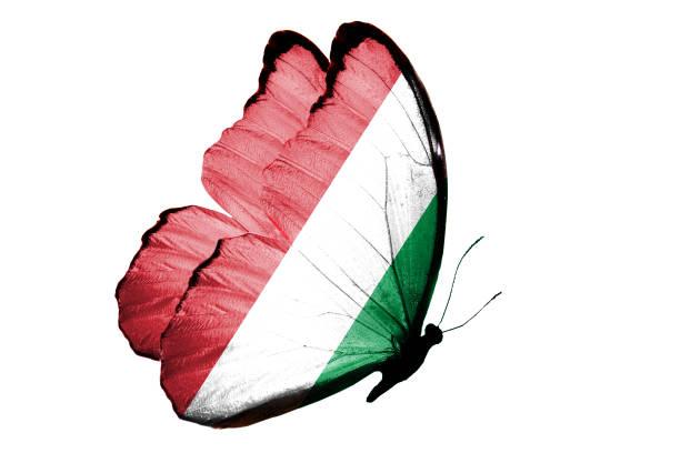 Flag of italy on the wings of a butterfly picture id941762092?b=1&k=6&m=941762092&s=612x612&w=0&h=kbuoptzhykmfztsh3tg8ljtvvlrcftrsccvflymjdvc=