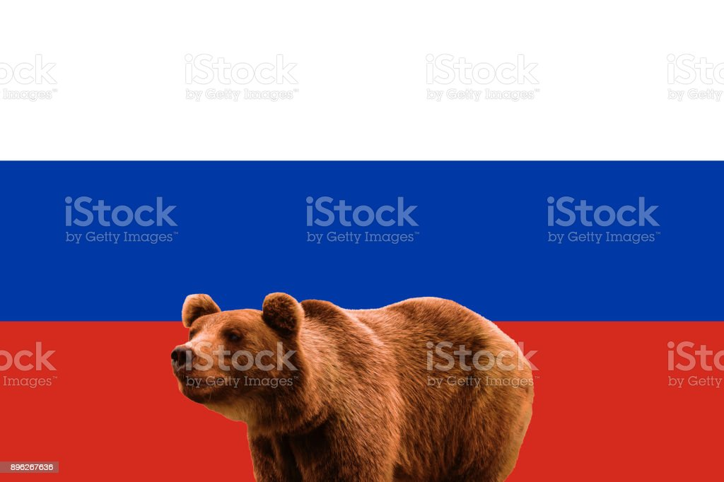Flag of Russia and russian bear, patriotic symbols stock photo