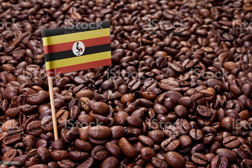 Flag of Uganda sticking in coffee beans.(series) stock photo