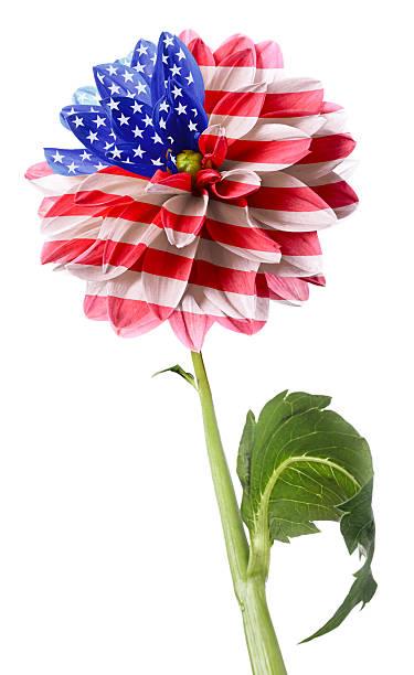 USA Flagge – Foto