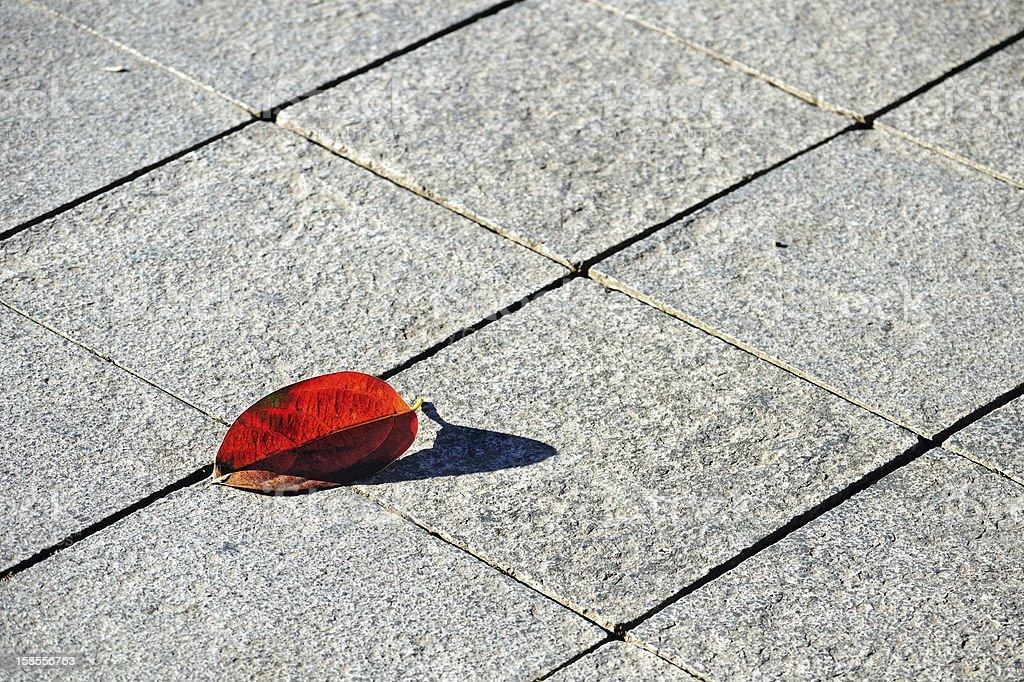 판석이 깔린 거리와 부두가 눈에 띕니다 지형, reddened 너도밤나무 잎 royalty-free 스톡 사진