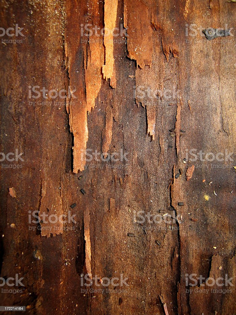 Flaking dark aged bark from a tree royalty-free stock photo