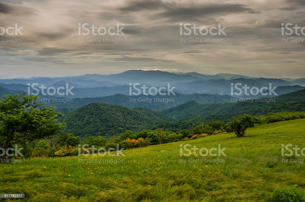 Flame Azalea Bloom in Front of Blue Ridge Mountains stock photo