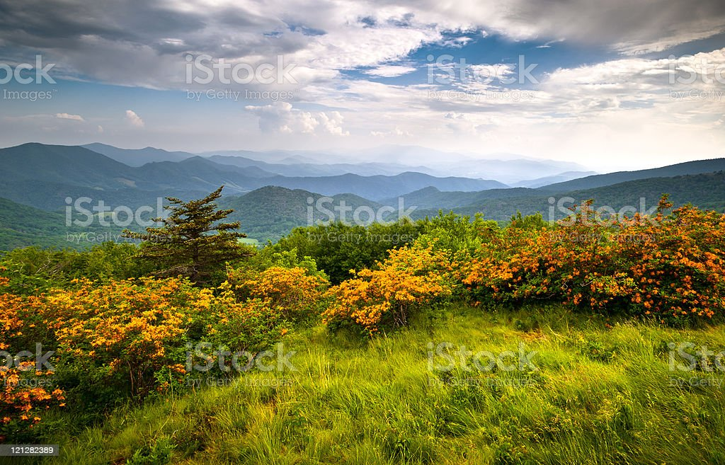 Flame Azalea Blooms Blue Ridge Mountains Roan Highlands State Park stock photo