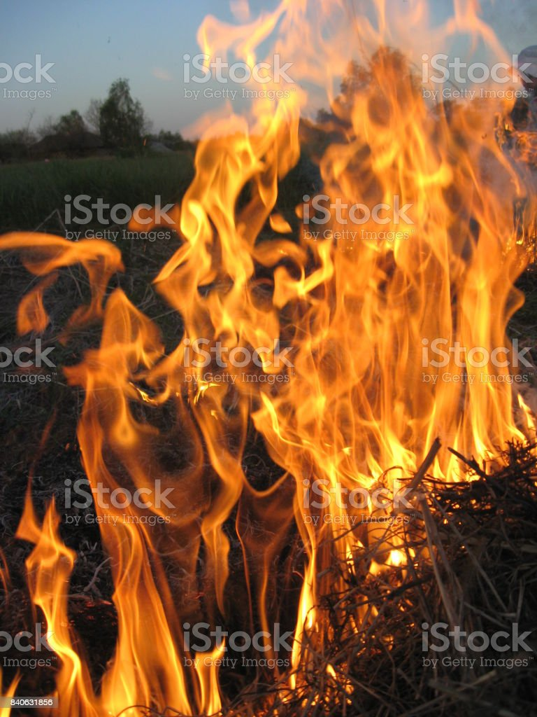 flame in the field stock photo