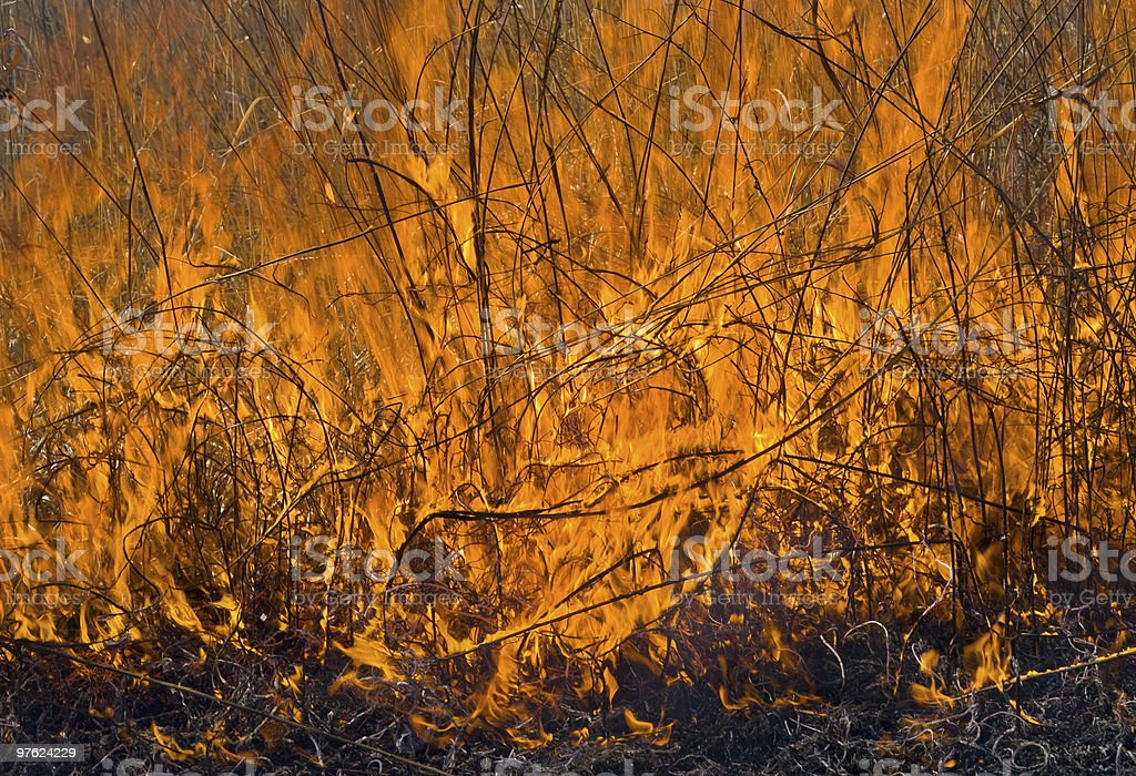 Flame of brushfire royaltyfri bildbanksbilder