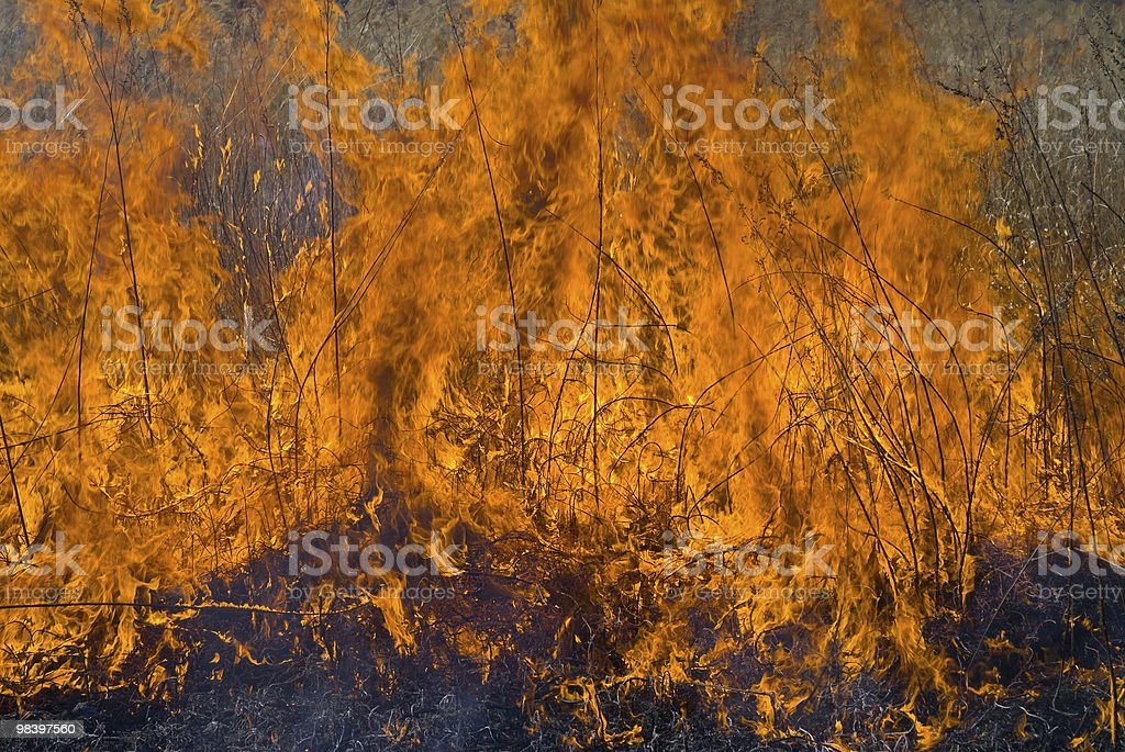 Flame of brushfire royalty-free stock photo