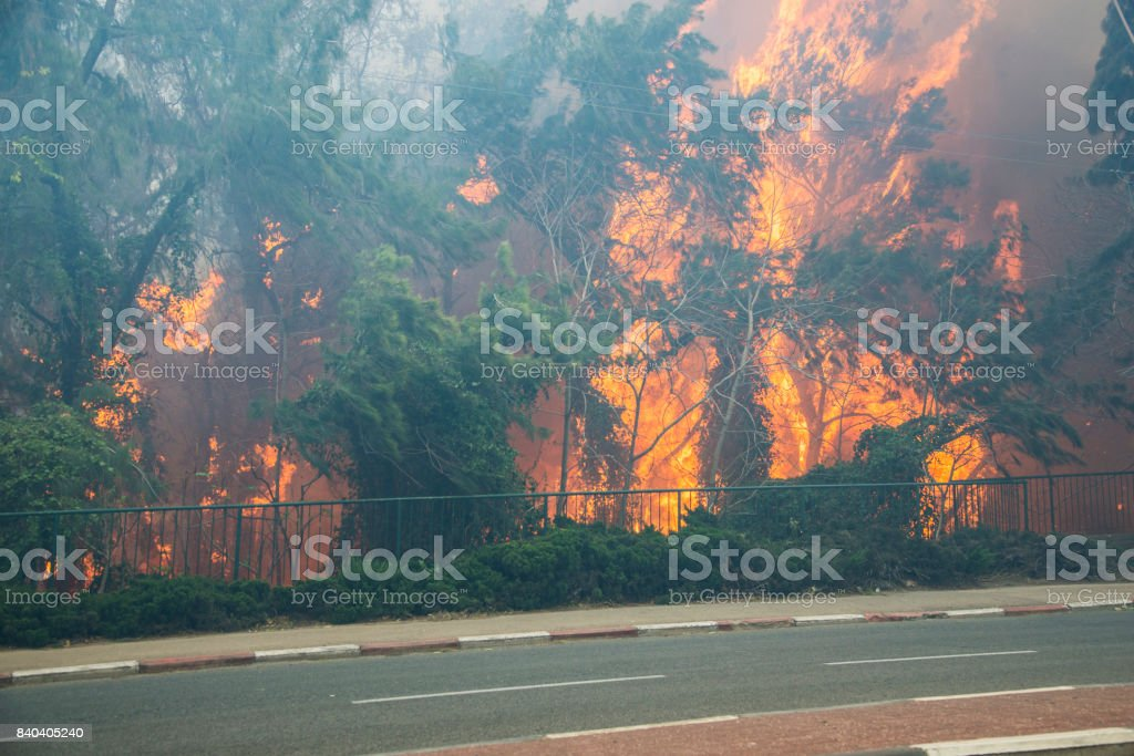 Flames from a  forest fire inside Haifa, Israel stock photo